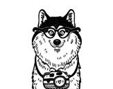 Desenho de Cão fotógrafo para colorear