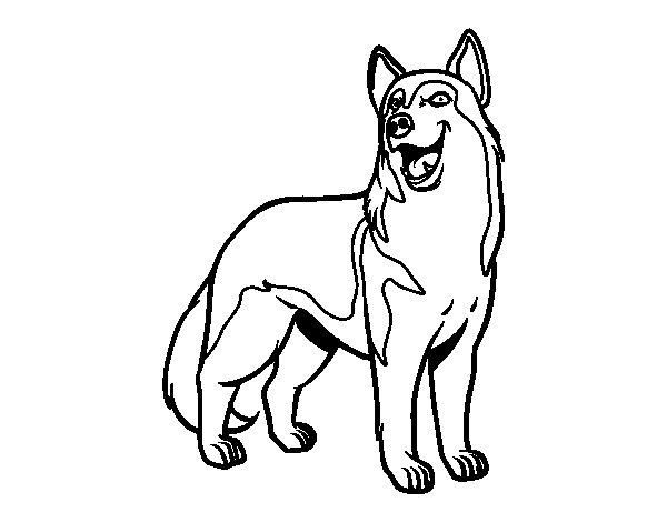 Desenho de Cão lobo para Colorir