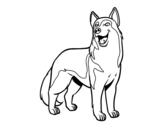 Desenho de Cão lobo para colorear