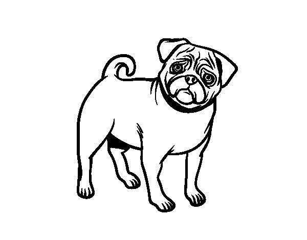 Desenho de Cão Pug para Colorir