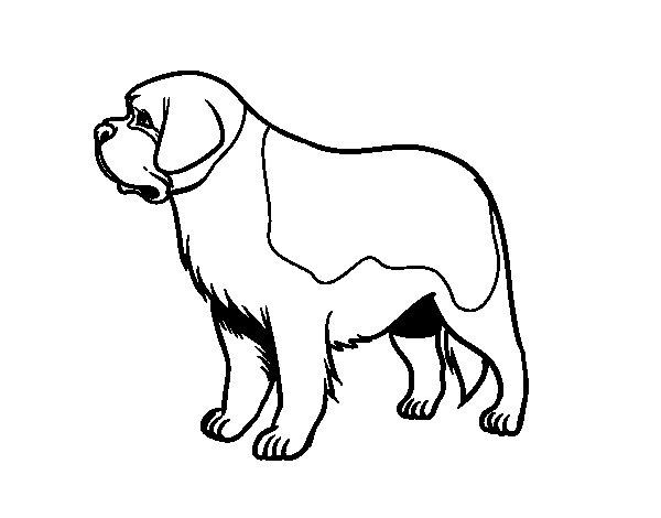 Desenho de Cão São-bernardo para Colorir