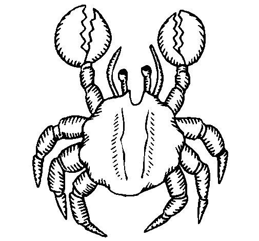 Desenho de Caranguejo de grandes pinças para Colorir