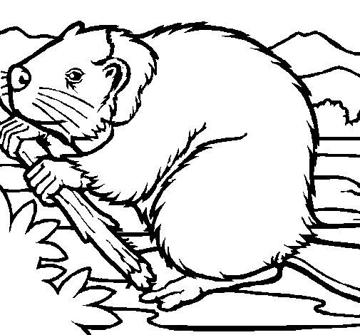 Desenho de Castor 1 para Colorir