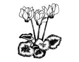 Desenho de Ciclame para colorear
