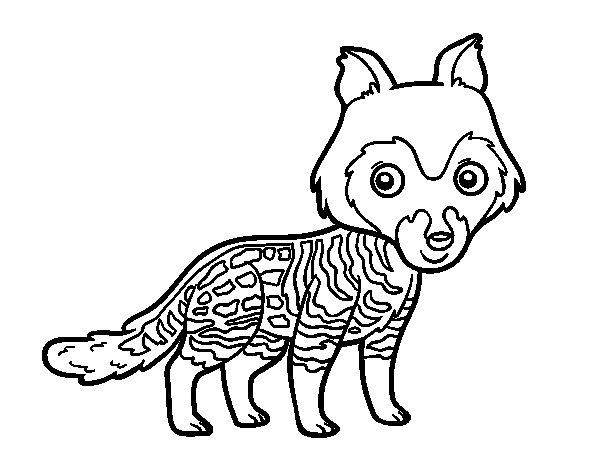 Desenho de Civeta-africana para Colorir