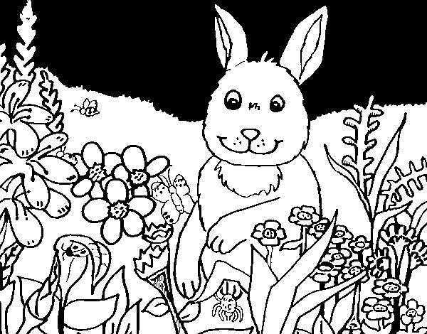 Desenho de Coelho no campo para Colorir