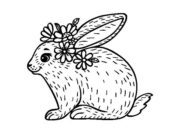 Desenho de Coelho primaveral para Colorir