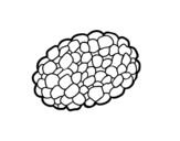 Desenho de Cogumelo trufa para colorear