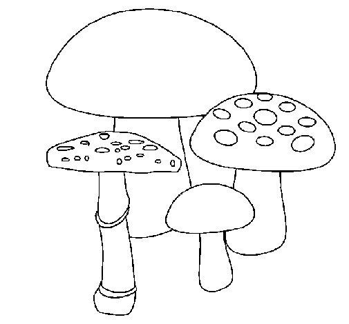 Desenho de Cogumelos para Colorir