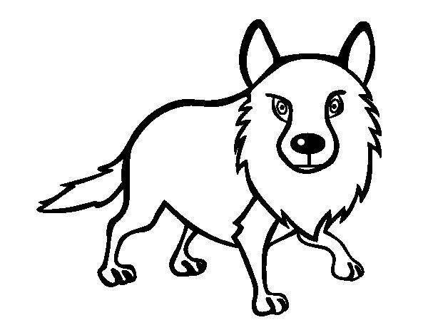 Desenho de Coiote adulto para Colorir