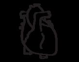 Desenho de Coração humano para colorear