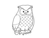 Desenho de Coruja adulta para colorear