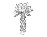 Desenho de Couve de bruxelas para colorear