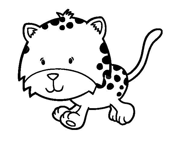 Desenho de Cria de guepardo a correr para Colorir