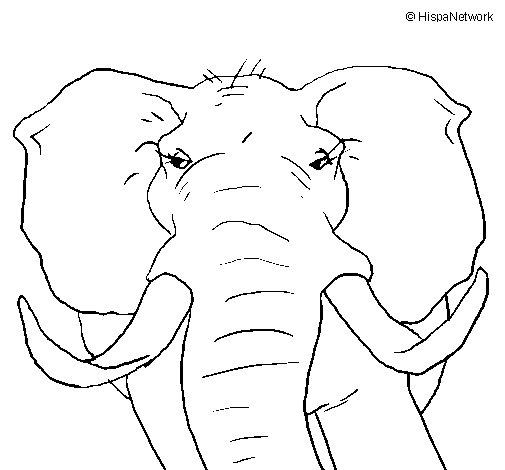 Desenho de Elefante africano para Colorir