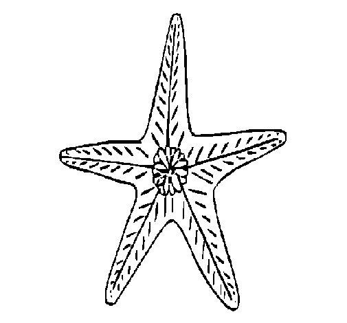 Desenho de Estrela do mar para Colorir