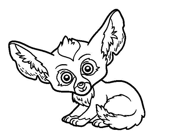 Desenho de Feneco para Colorir