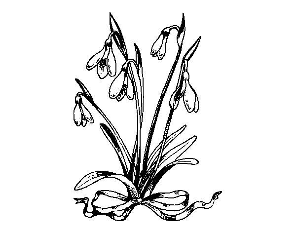 Desenho de Flor bola-de-neve para Colorir