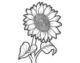 Desenho de Flor de girassol para colorear