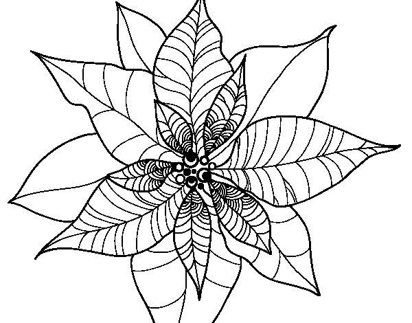 Desenho de Flor de poinsétia para Colorir