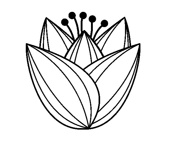 Desenho de Flor de túlipa para Colorir