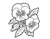 Desenho de Flores de amor-perfeito para colorear