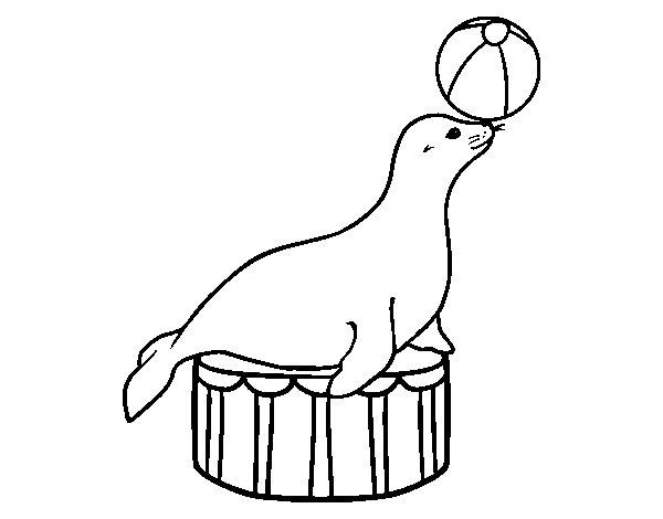 Desenho de Foca equilibrista  para Colorir
