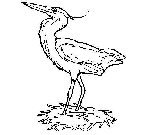 Desenho de Garça real no seu ninho para Colorir