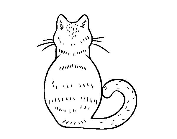 Desenho De Gato De Volta Para Colorir