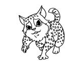 Desenho de Gato-montês para colorear