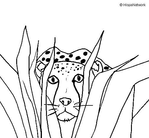 Desenho de Guepardo para Colorir