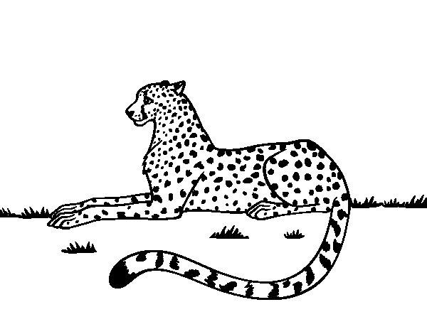 Desenho de Guepardo em repouso para Colorir