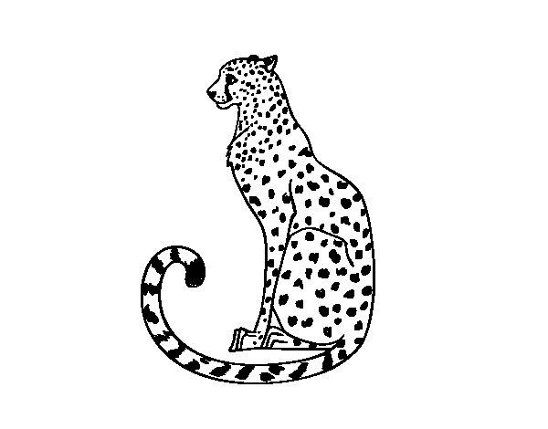 Desenho de Guepardo sentado para Colorir