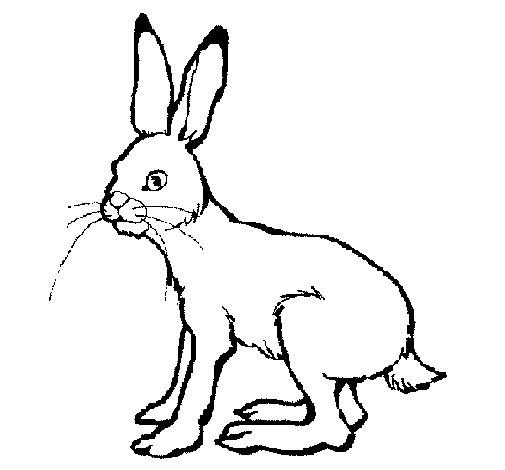 Desenho de Lebre para Colorir
