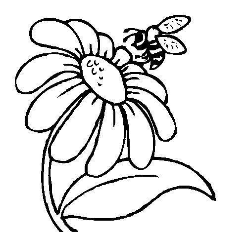 Desenho de Margarida com abelha para Colorir