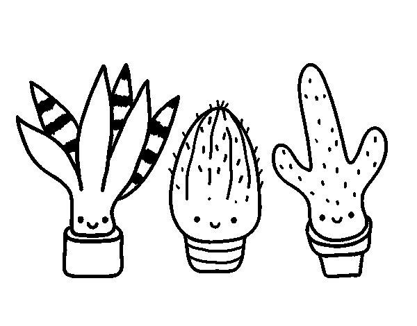 Desenho de Mini cactus para Colorir