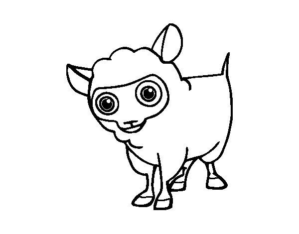 Desenho de Ovelha de lã para Colorir