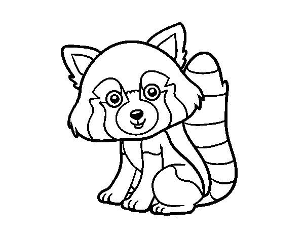 Desenho de Panda vermelho para Colorir