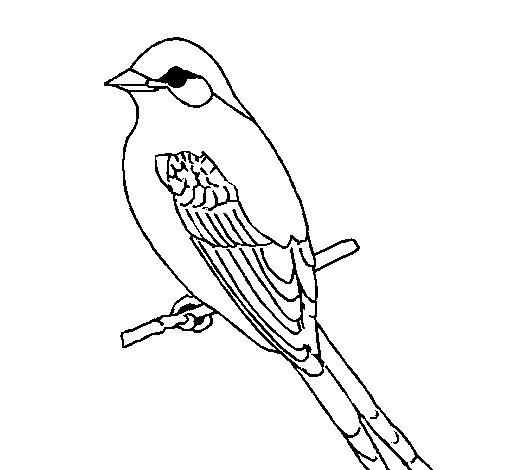 Desenho de Papa-moscas para Colorir