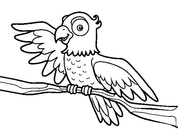 Desenho de Papagaio en liberdade para Colorir