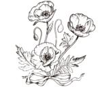 Desenho de Papoilas salvagens para colorear