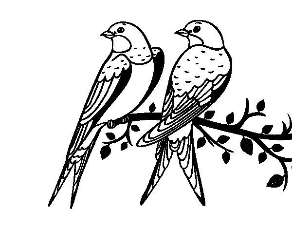 Desenho de Par de pássaros para Colorir