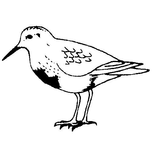 Desenho de Pássaro para Colorir