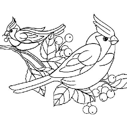 Desenho de Pássaros para Colorir