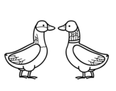 Dibujo de Pato fêmea e pato masculino