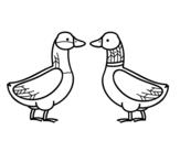 Desenho de Pato fêmea e pato masculino para colorear