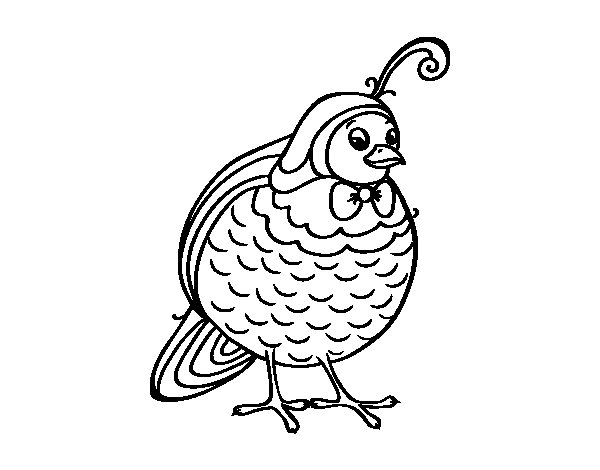 Desenho de Pernice para Colorir