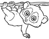 Dibujo de Pigmeu loris lento