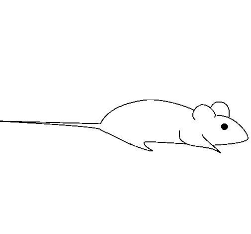 Desenho de Rata para Colorir