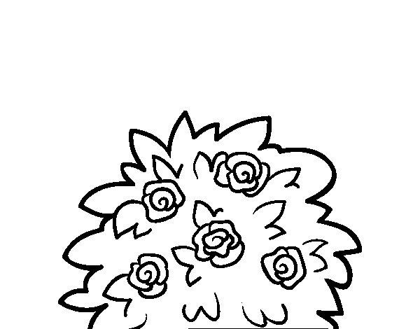 Desenho de Rosa-canina para Colorir